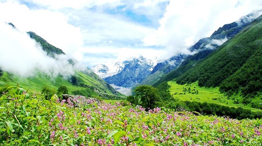 Nanda Devi and Valley of Flowers National Parks, Uttarakhand